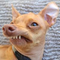 Tuna - Cachorro